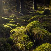 Spousta mechu v norském lese