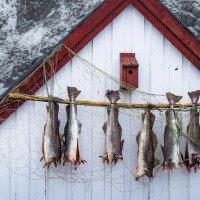 Ryby se suší, kde se dá