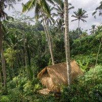 Rýžové terasy Tegalalang
