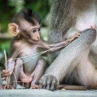 Ubud - monkey forrest