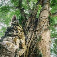 Ubud - monkey forrest - takový kulturní prales se spoustou opic