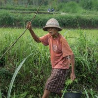 Undisan - realita vesnického života