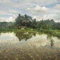 Undisan - pěkná procházka kolem rýžových pollíček
