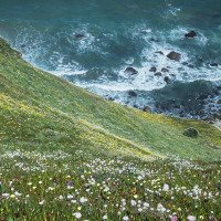 Na jaře jsou útesy kompletně pokryté květy