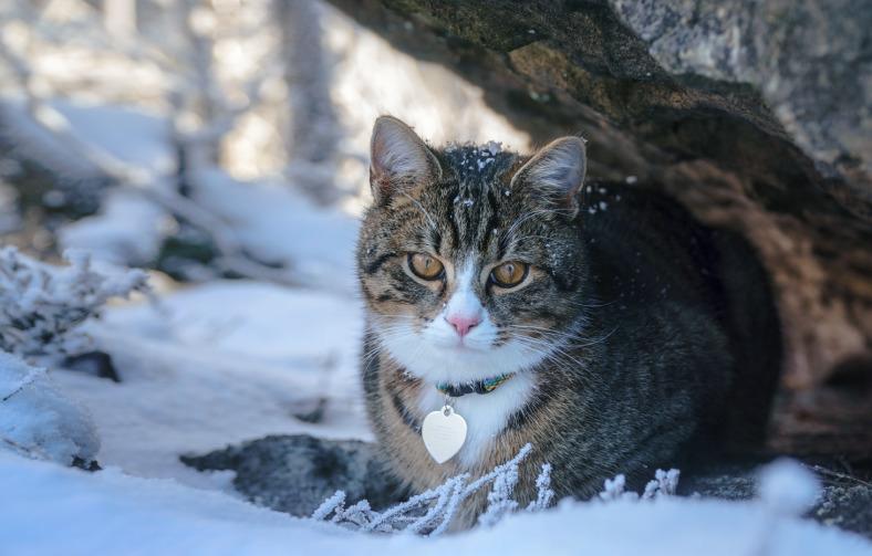 Místní kočka