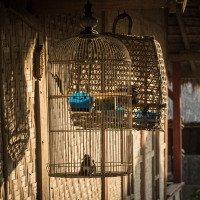 Tradiční vesnice pod Rinjani