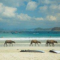 Pláž Selong Belanak - ideální vlny pro začátečníky