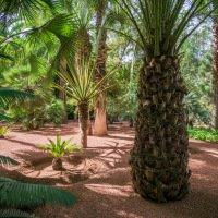 Zahrady Jardin Majorelle