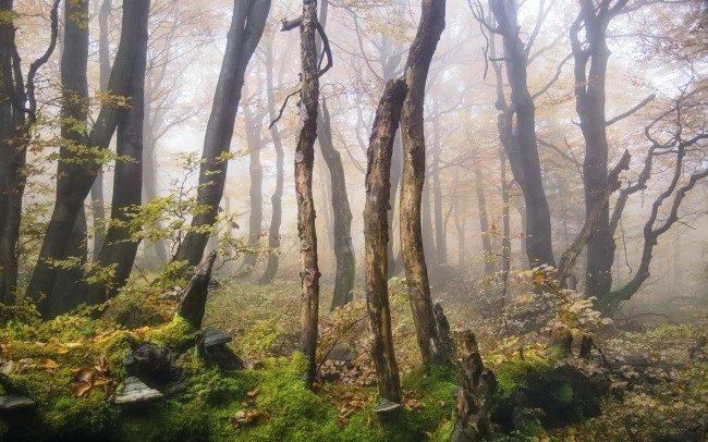 mlha-rychorsky-prales