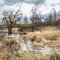 Okolí lomu obsadila divoká příroda