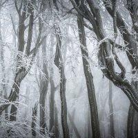 Omrzlé kmeny bučin, když vítr na krátký okamžik přivál trochu víc oblačnosti.