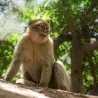 Kolem vodopádů pobíhá spousta opic