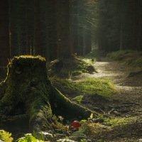 Cestou nahoru - starý pařez, mladá mochomůrka