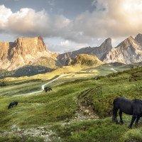 Passo Giau - kromě koní se tu pasou ještě krávy, neustále jsou slyšet jejich zvonce
