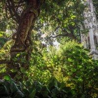 Quinta da Regaleira je obklopená rozsáhlou zahradou