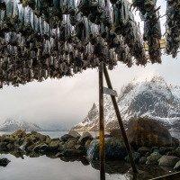 Reine - tradiční sušení ryb