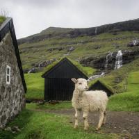 I tu jsou samozřejmě ovce